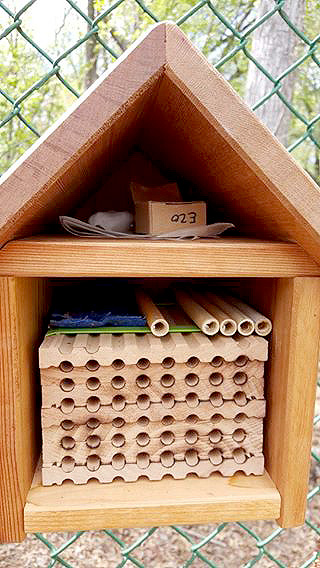 (right) The wooden block is for bees to nest in.  Each bee will pick one hole and stick with it  until it's full of eggs. The reeds are just to make it more visually interesting for them.  The blue cloth is doused with mason bee  attractant, to help them stay (and maybe attract  some wild ones). The little cardboard box is full  of bee cocoons. In the back is a cotton ball  soaked in sugar water so they have some food  for when they first awaken. They're tired and hungry after not eating all winter!